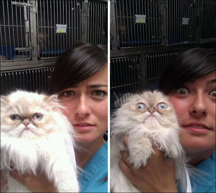 Коты узнали, что их поведут к ветеринару