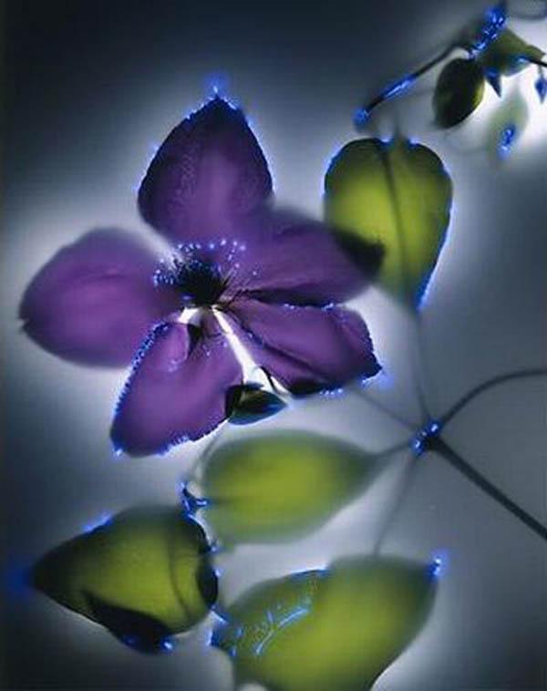 Растения под электричеством