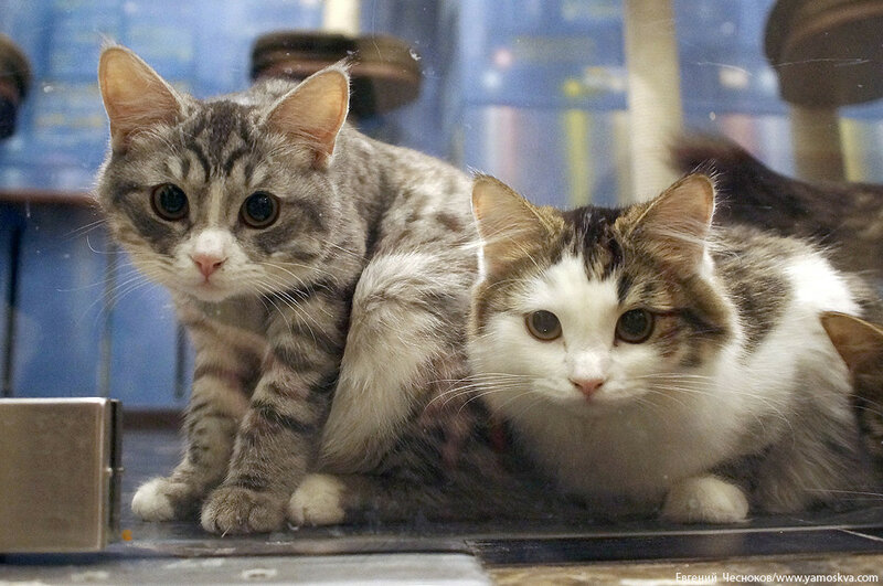 Осень. Театр кошек. Кошки. 15.10.15.01..jpg