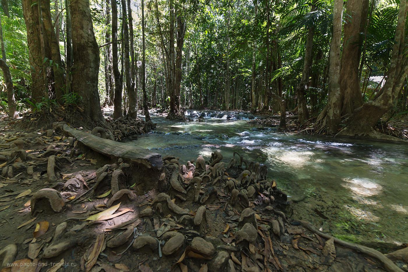 Фотография 25. Под пологом джунглей в парке Khao Phra Bang Khram Nature Reserve, куда мы приехали во время отдыха в Таиланде самостоятельно. Отчет о поездке на машине (250, 14, 9.0, 1/25) (500, 14, 8.0, 1/25)