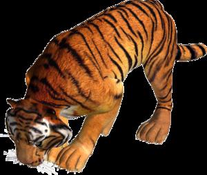 тигры, png