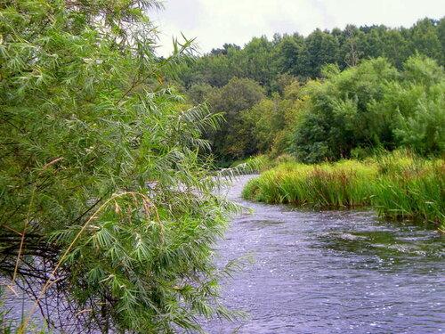 Склонилась ива над рекой