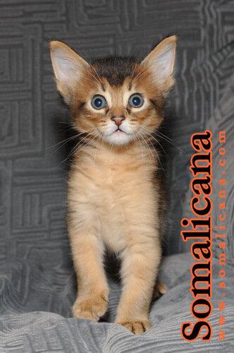 Котик 1