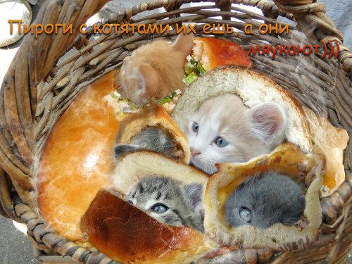 http://img-fotki.yandex.ru/get/3707/homo-bobr.6/0_10acd_d38493f_L.jpg