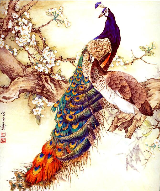 злююка :D. по-моему это 2 вида самых прекрасных птиц на