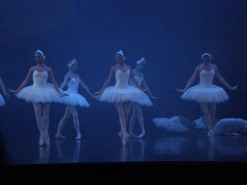 """Балет """"Лебединое озеро"""". Лебеди в тумане"""