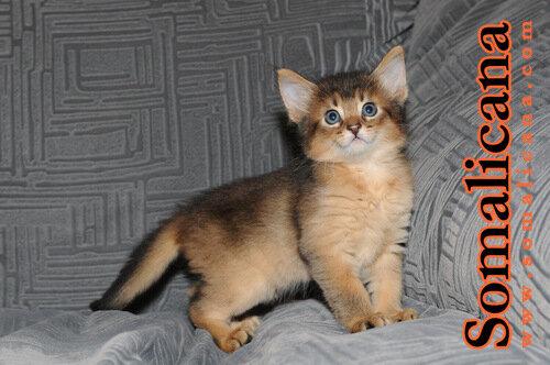 Котик 2 Male 2