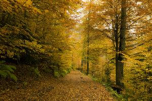 Абхазская осень