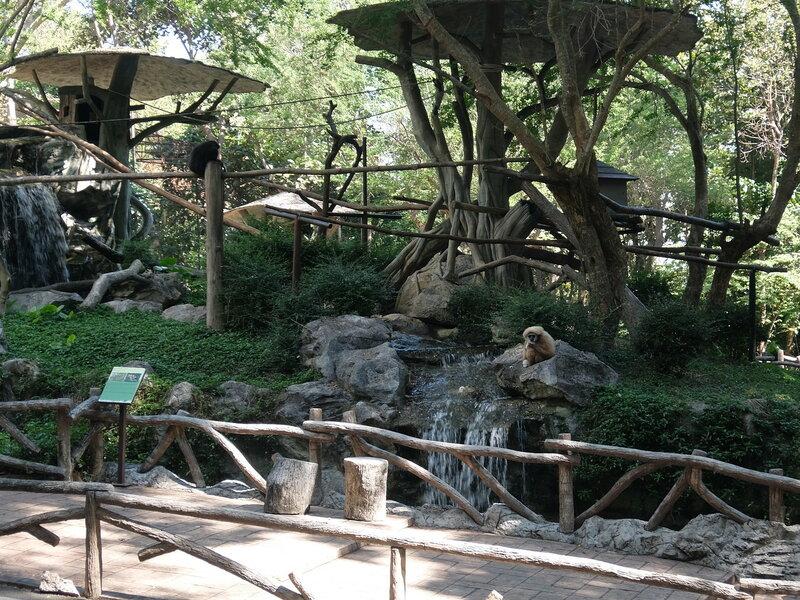 Чиангмай - Зоопарк - Приматы