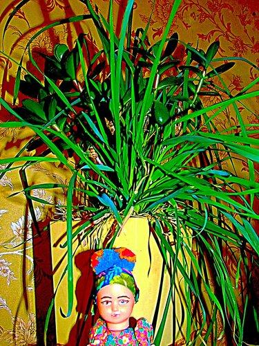 Русская красавица сидит под домашним баобабом