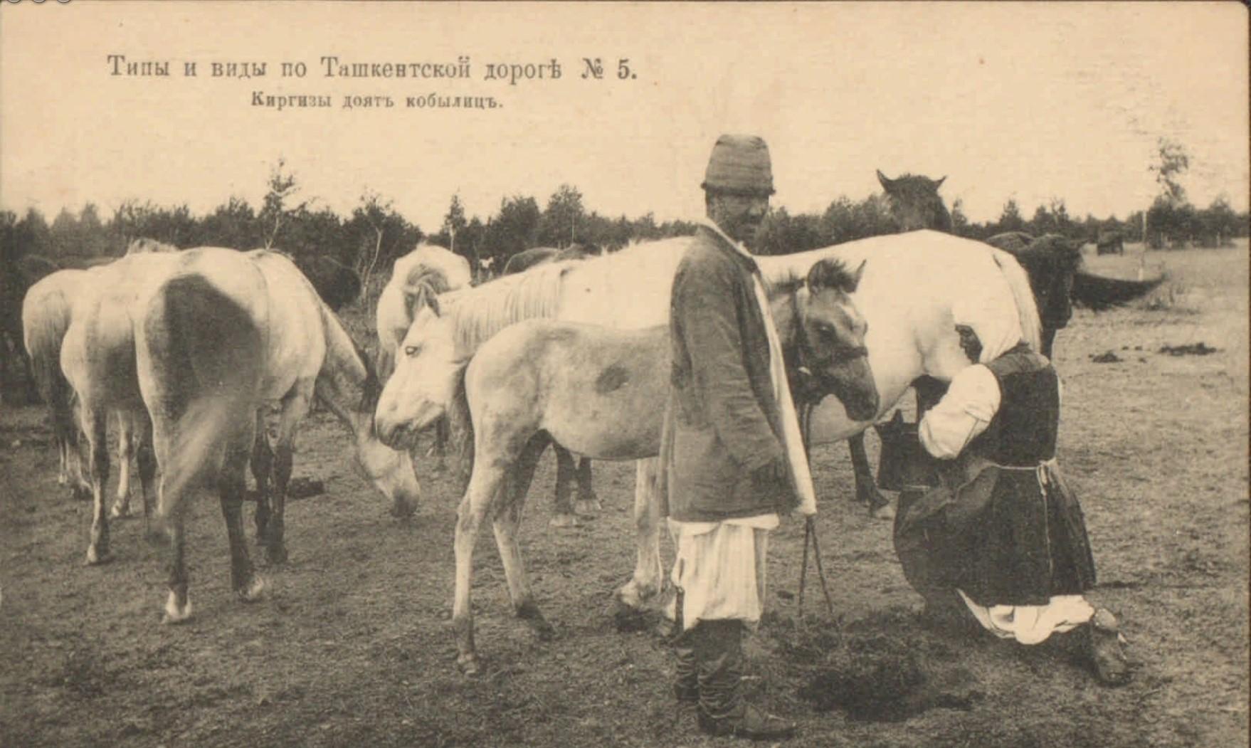 Окрестности Ташкента. Киргизы доят кобылиц