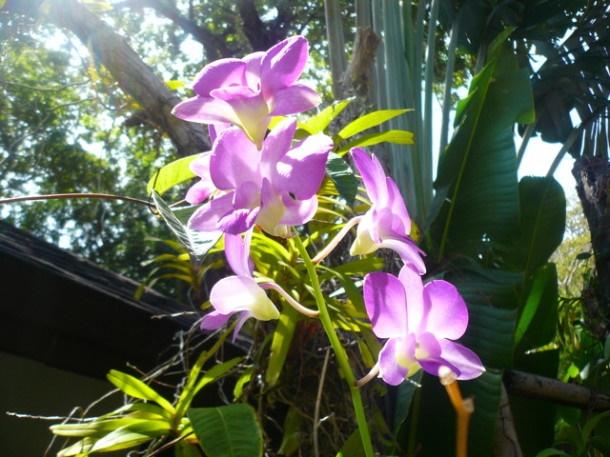 Цветы Таиланда 0 141adb cfea5963 orig