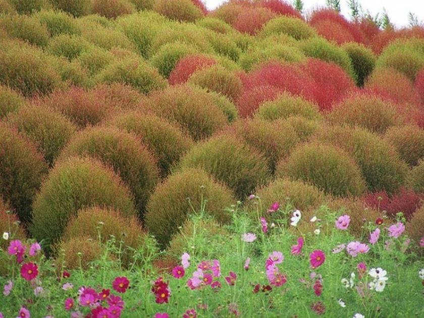 Живописный японский парк Хитати Кайхин 0 1422ce 3079a5d5 orig