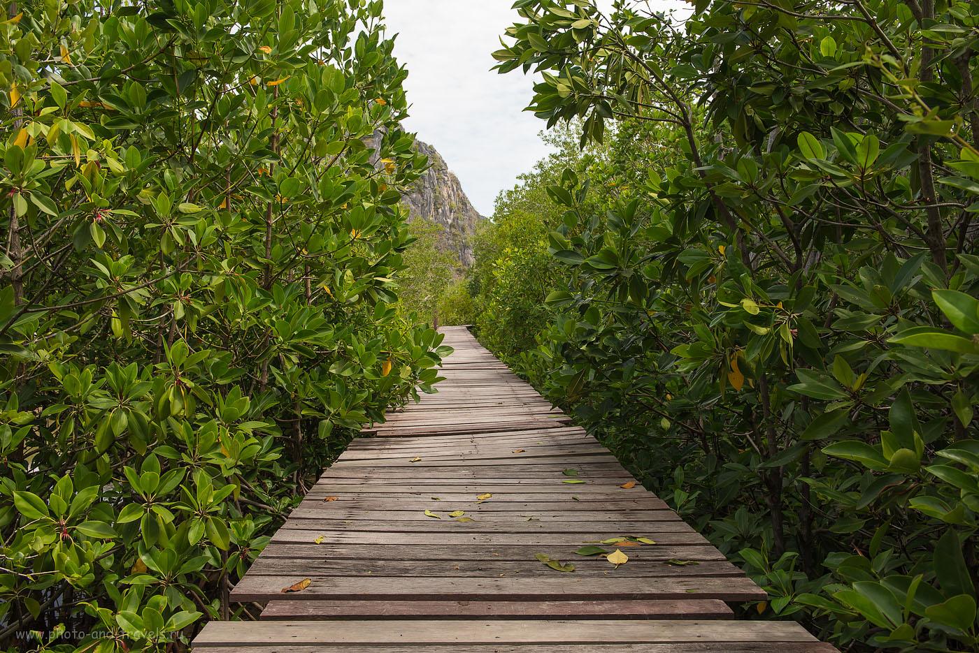Фото 20. Прогулка по мангровым зарослям у смотровой площадки Khao Daeng Viewpoint (Камера Nikon D610 body, объектив Nikkor 24-70/2.8 с поляриком Hoya HD Circular-PL. Настройки: ИСО 320, ФР=32, F=8.0, выдержка 1/125)