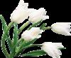 png, клипарт, цветы