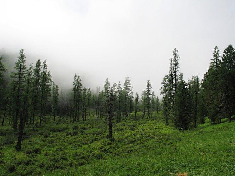 Низкая облачность в тайге