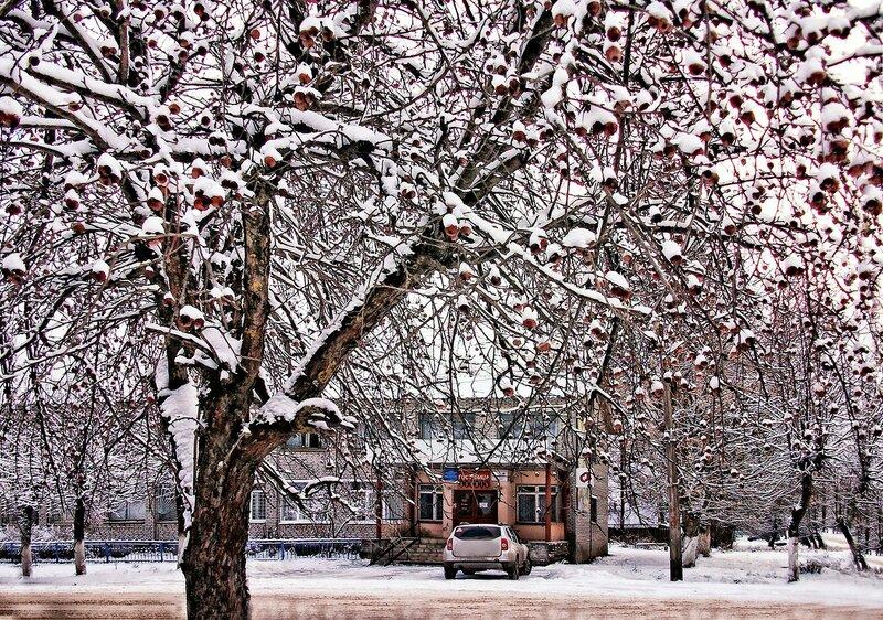Яблоки в снегу. Декабрь 2017