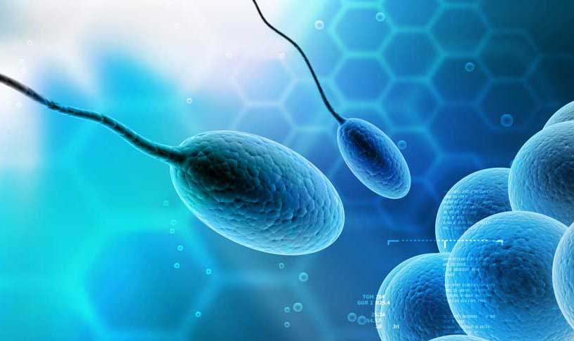 генетический контрацептив