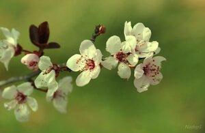 Весны приветливая нежность...