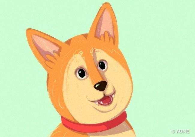 Так собака проявляет любопытство иреагирует нановое событие всвоем окружении.  Уши прижаты кг