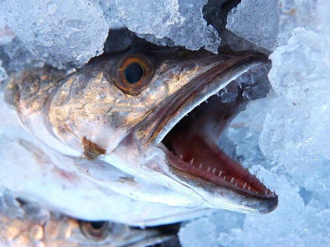 Рыбный отдел больше никогда не будет таким, как прежде…