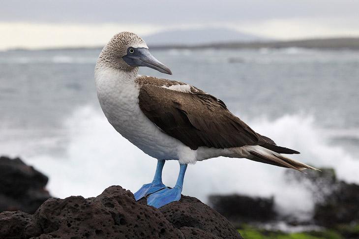 Путешествие на Галапагосские острова. (32 фото)