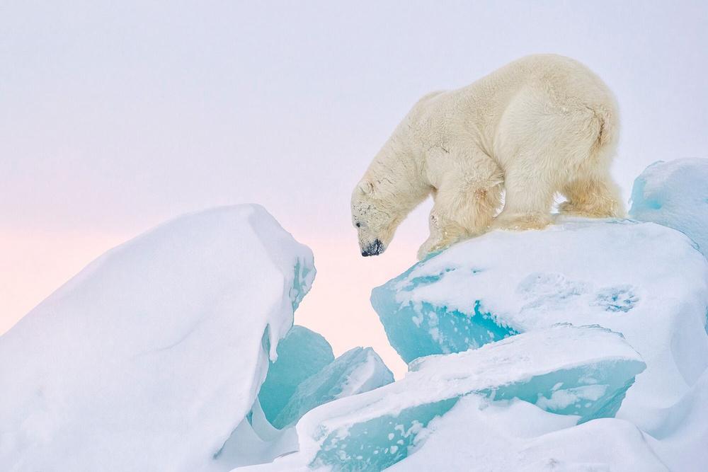 «Призраки Арктики»: белые медведи, северные олени и потрясающие пейзажи полярного архипелага (10 фото)
