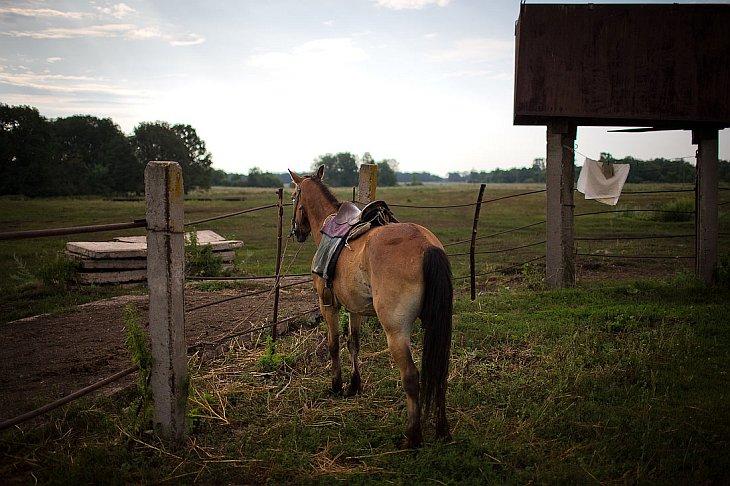 Фотографии и текст Рустема Адагамова   На кумысной ферме примерно 250 лошадок, которые дают мол