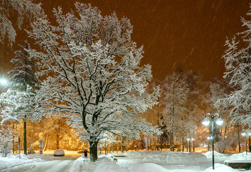 Зимний дуб.