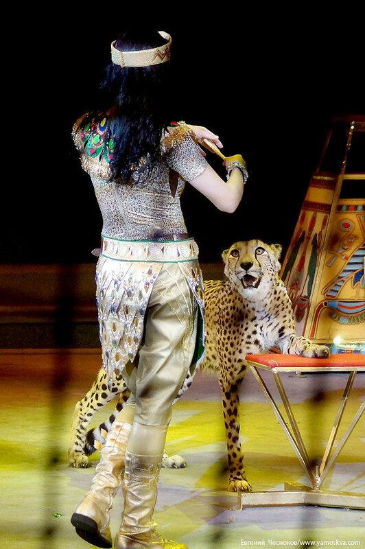 Цирк Дарьи Костюк. Вегас. 15.10.17.65..jpg