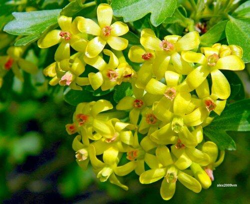 Россыпи жёлтого цветения