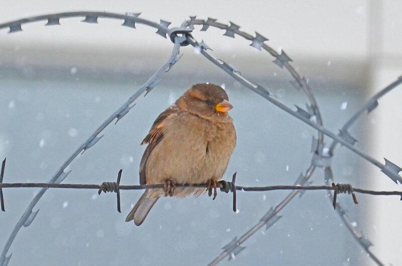 Для птиц не существует границ