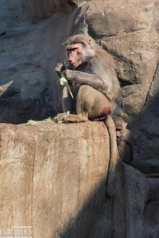 warshaw_zoo-103.jpg
