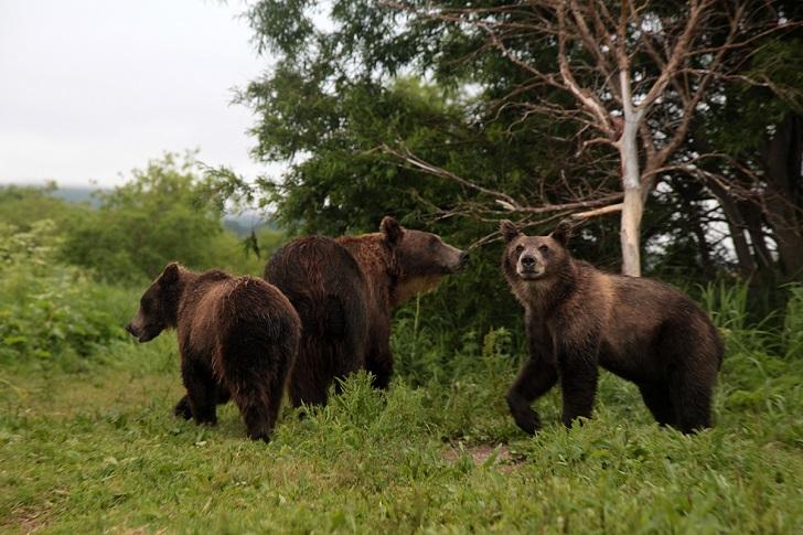 Приходили и еще несколько подростков. А вечером пришла матуха с двумя медвежатами.