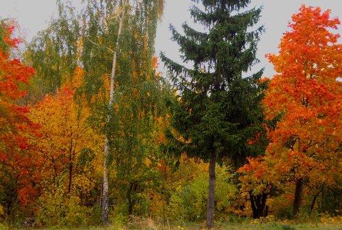 Осенние наряды
