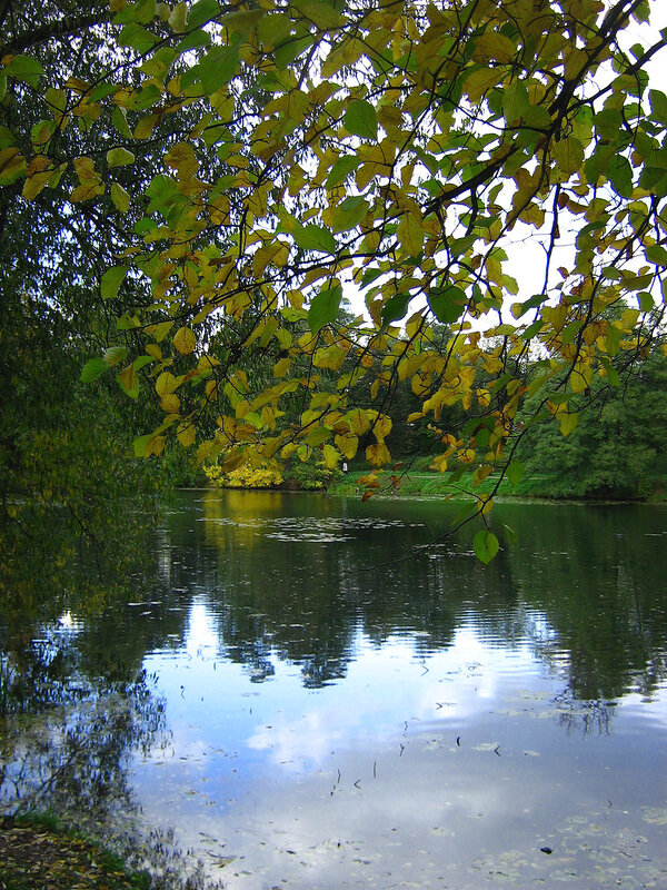 Осенняя ветка и пруд