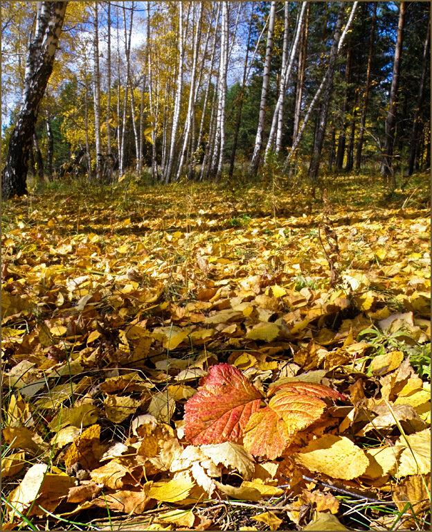 Упал на землю лист
