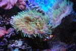 кораллы 3