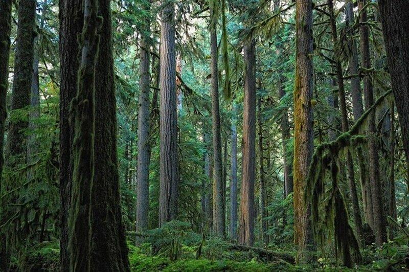 Национальный парк Маунт Рейнир, США