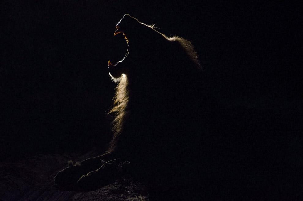 20. Замочная скважина. Калифорния. (Фото Bachir Badaoui | National Geographic Photo Contest):