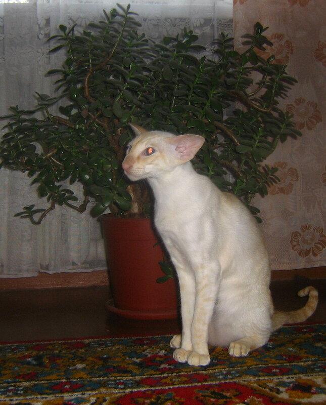коты и цветы - Страница 2 0_354b2_f5e8339c_XL