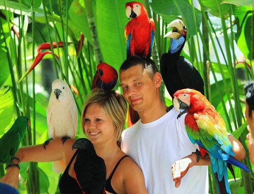 38 попугаев и других звериков
