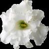 цветы, клипарт, png