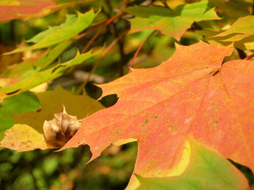 Мои фото. Осень