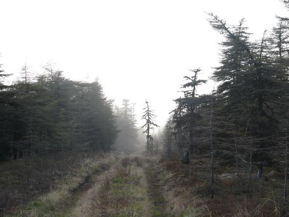 дорога в тумане.jpg