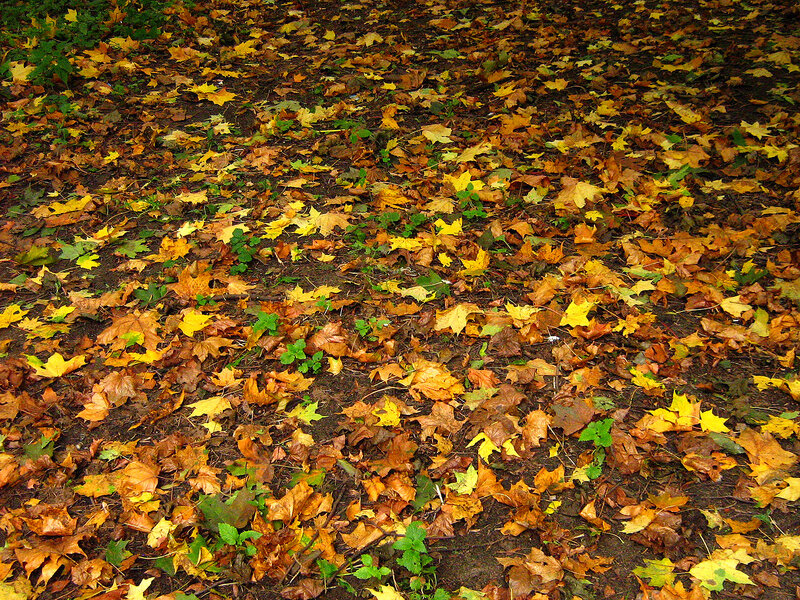 Ковер листвы