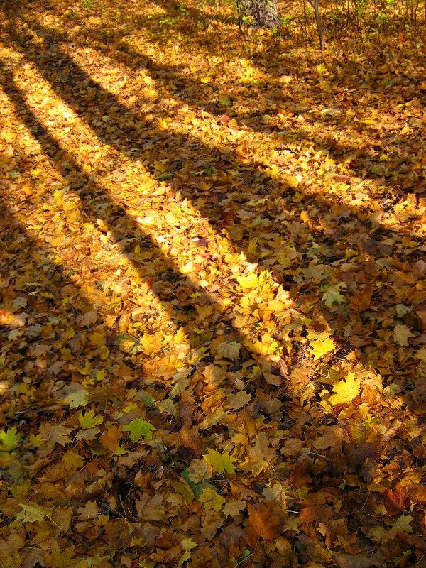 Золотая полосатая осень