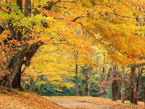 Трафареты осень