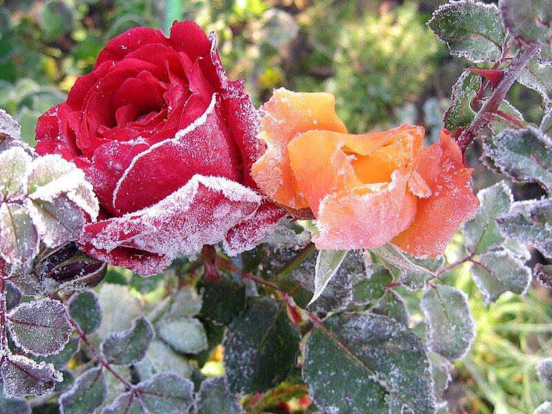 Замороженная красота 1