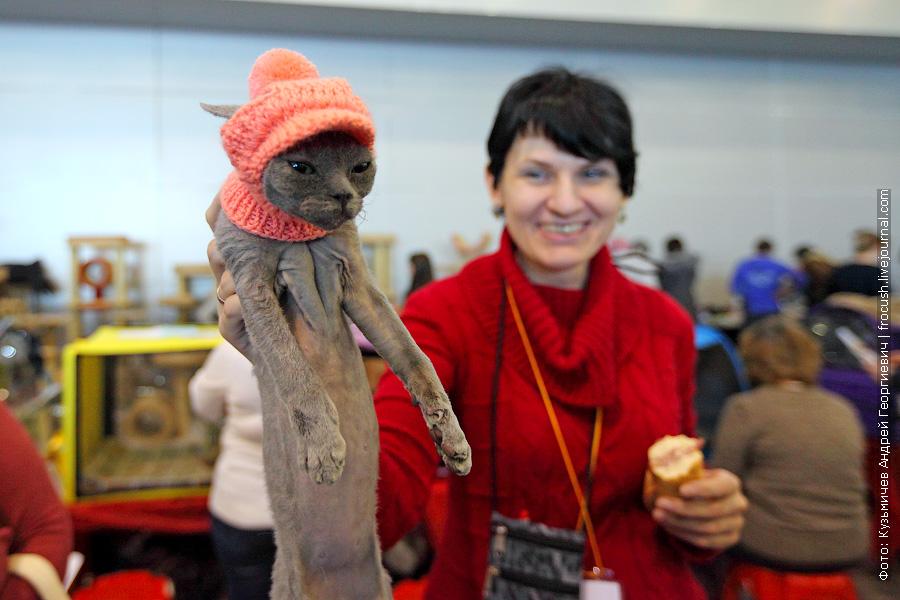 Девон-рекс в шапочке для кошек